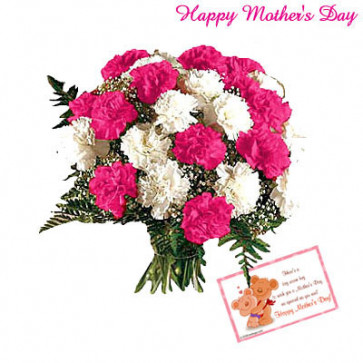 Beautiful Carnation - 30 Pink and White Carnations and Card