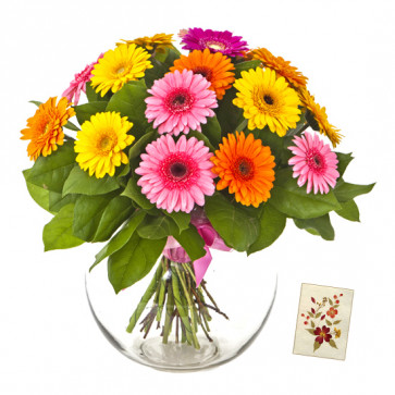 Mix Gerberas - 30 Artificial Mix Gerberas Vase + Card
