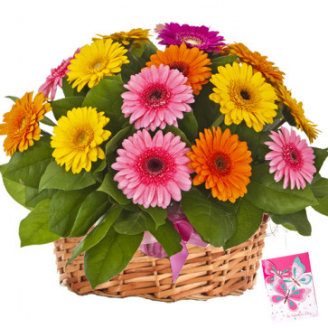 Shining Invitation - 50 Assorted Flowers Basket + Card