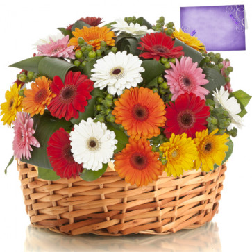 Beautiful Gerberas - 24 Mix Gerberas in Basket + Card