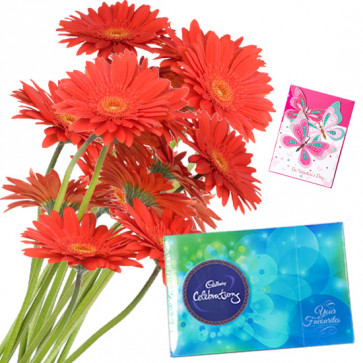 Orange Celebrations - 12 Orange Gerberas Bunch, Cadbury Celebration + Card