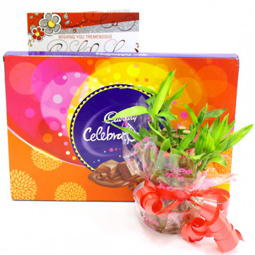 Luck N Celebration - Cadbury Celebrations, 2 Layer Bamboo Plant and Card
