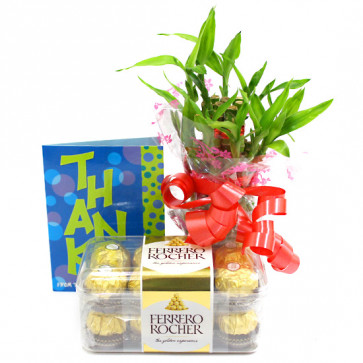 Lucky Crunch - Ferrero Rocher 16 Pcs, 3 Layer Bamboo Plant and Card