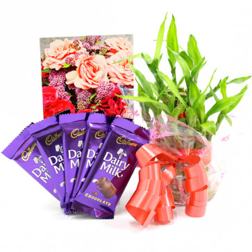 Lucky Dairy Milk - 5 Dairy Milk, 2 Layer Bamboo Plant and Card
