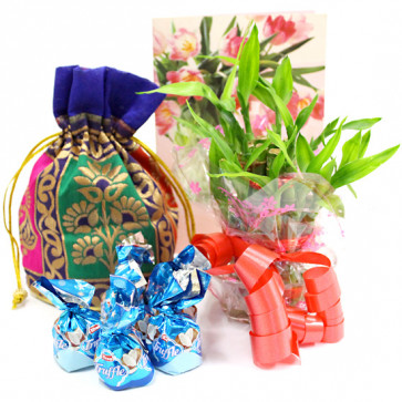 Lucky Assortment - 3 Layer Bamboo Plant, Assorted Truffle Chocolates 100 gms in Potli and Card