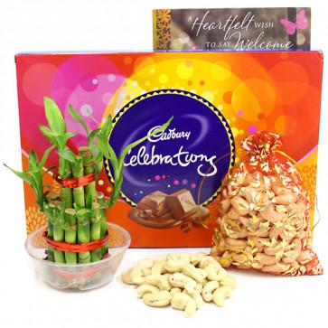 Celebrate Luck - Cashew in Potli, Cadbury Celebrations, 2 Layer Bamboo Plant