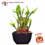 Goodluck Bamboo - 2 Layer Bamboo Plant and Card