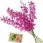 Pious Soul - 6 Orchids Bunch + Card