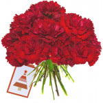 Spirit of Love - 24 Red Carnations Bouquet + Card