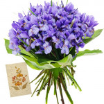 Beautiful Orchids - 15 Purple Orchids Bunch + Card