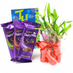 Silky Luck - 3 Dairy Milk Silk, 3 Layer Bamboo Plant and Card