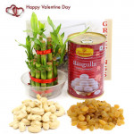 Kaju Draksh - Cashew & Raisins, Rasgulla 500 gms Tin, 1 Layer Bamboo Plant and Card