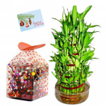 Lucky Choco - 3 Layer Lucky Bamboo, Handmade Chocolates 250 gms & Card