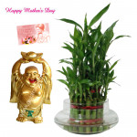 Lucky Buddha - 2 Layer Lucky Bamboo Plant, Laughing Buddha and Card
