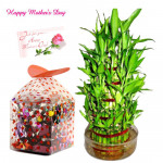 Chocolaty Luck - 1 Layer Lucky Bamboo Plant, Handmade Chocolates 250 gms and Card