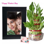 Frame with Lucky Plant - 2 Layer Lucky Bamboo Plant, Photo Frame