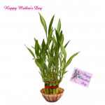 Bamboo Luck - 1 Layer Lucky Bamboo and Card