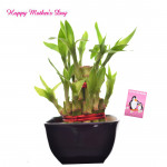 Double Luck - 2 Layer Lucky Bamboo and Card