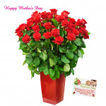 Big Vase Flowers - 50 Red Roses in Vase and card