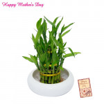 Lucky Bamboo Plant and Card