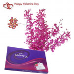 Special Wishes - 12 Purple Orchids + Cadbury Celebration + Card
